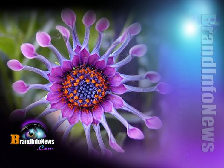 How to Grow Spiritually ….